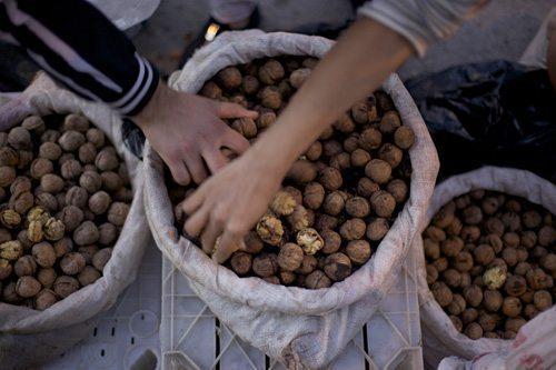 walnuts elazig
