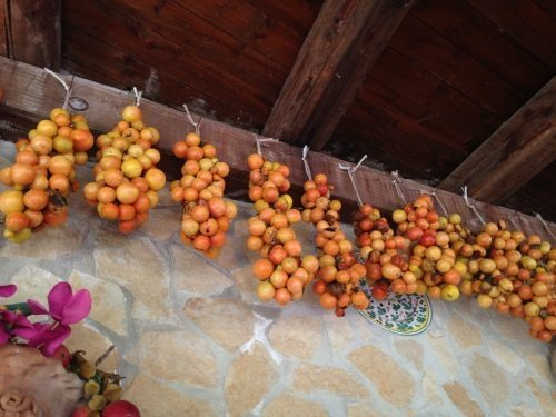 pomodori campestre