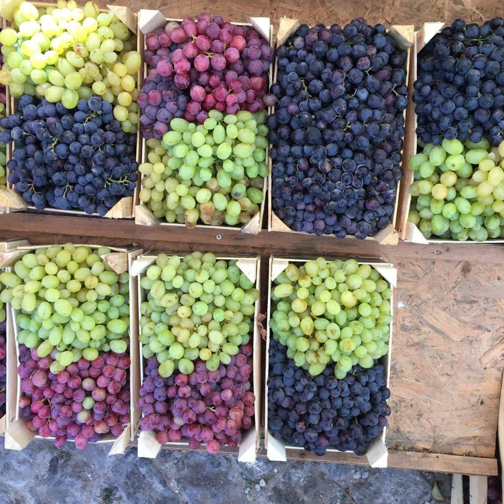 bozcaada grapes